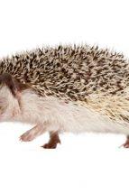 Are you a fox or a hedgehog?